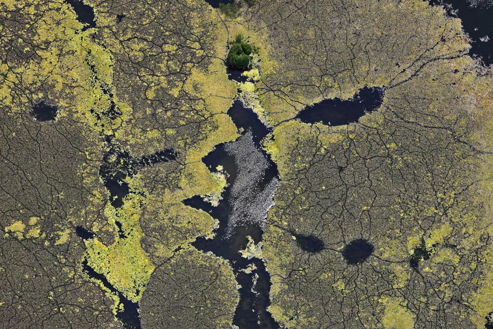 Luftbild von Algen auf einem Baggersee. Sieht aus wie eine Landkarte für Enten