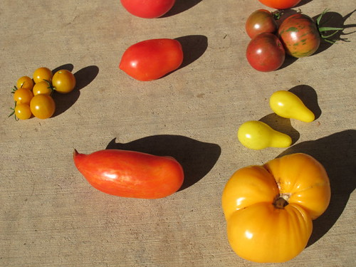 Heirloom tomato art