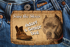 Adopt a Senior Dog Month, November, Save the Shoes (Beverly & Pack) Tags: old november blue rescue pets art dogs senior animals puppy poster free save pitbull american creativecommons download denim bluejeans adopt month adoption publicdomain americanpitbullterrier adoptaseniordog savetheshoes leathertag