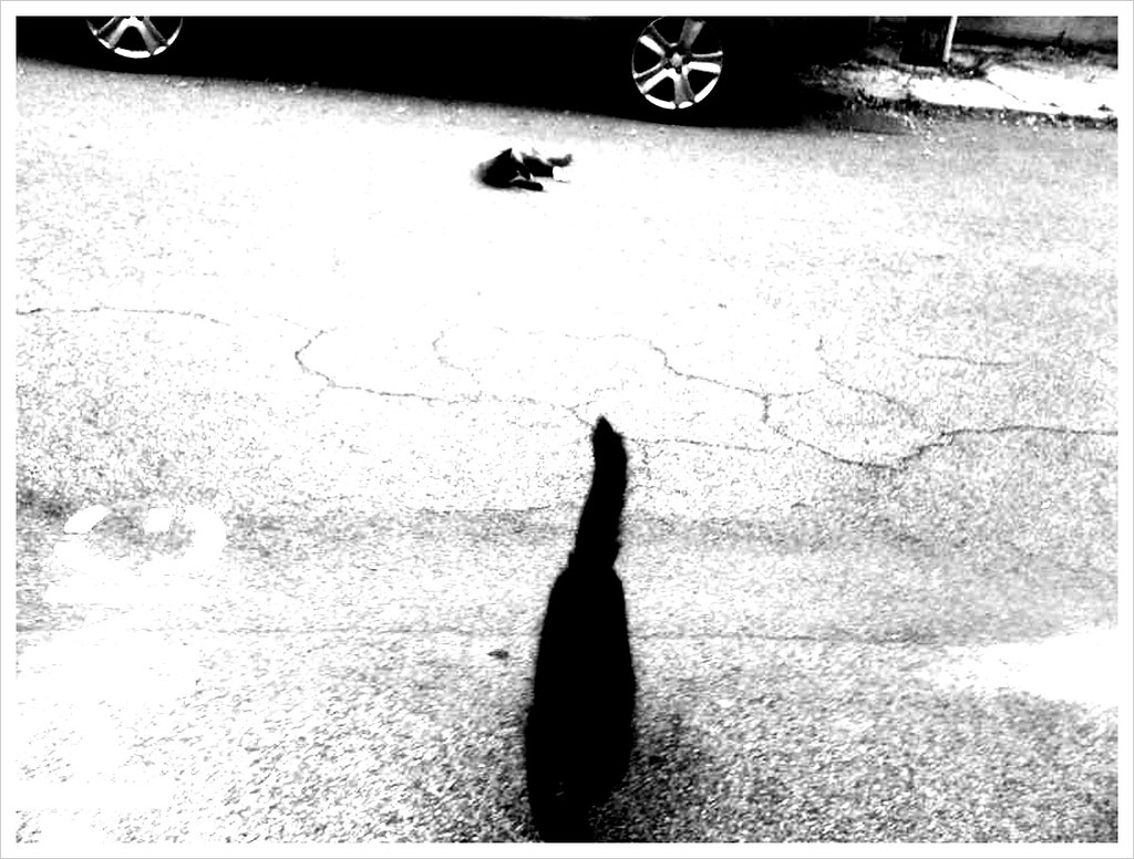 cat attack 5