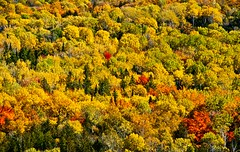 Manitoulin Island (Birgit-Cathrin  Duval) Tags: trees ontario canada fall nature forest landscapes manitoulinisland bäume landschaften wälder