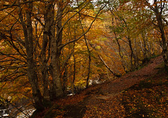 River Inver in Autumn (AEChown) Tags: sutherland lochinver assynt riverinver