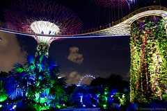 Gardens by the Bay , Supertree Grove (CHWVB) Tags: singapur night city gardens bay supertrees tree skyway singapore marina