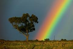 Winter Sun-Rainbow! (maginoz1) Tags: surreal sky rainbow abstract art manipulate curves gumtree winter july 2017 bulla melbourne victoria australia canon g3x