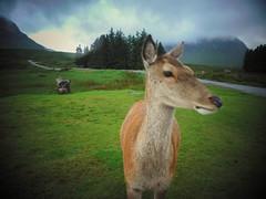 Wild Scotland (Nicolas Valentin) Tags: deer scotland highland