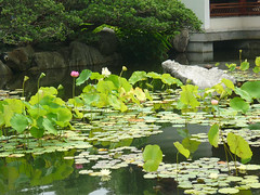 chinese garden4 (AppaAmmaGolfview) Tags: harbour qvb darling