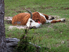 BONELUST - Dead Cow 3