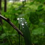 Y después de la lluvia... thumbnail