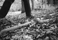 walk in the park (Stefaan Vinckevleugel) Tags: blackwhite tmax iso400 eos5