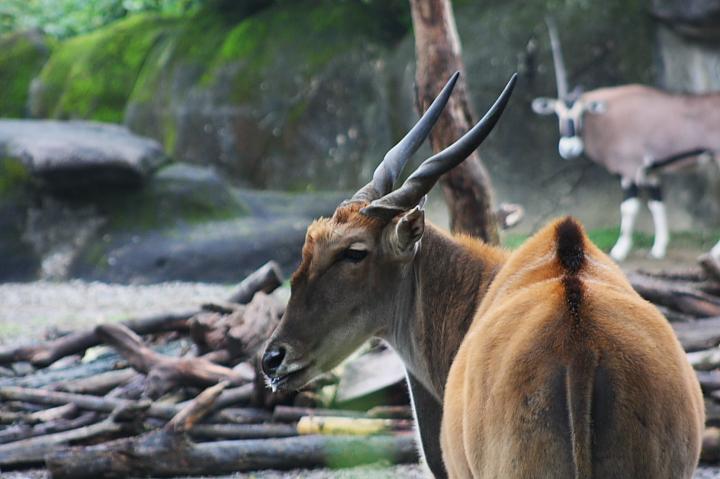 2009木柵動物園0007