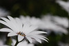 White looking up (Jakob Gronkjaer) Tags: 105mmf28 nikond80 12500secatf80