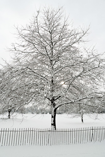 Wintery tree in Christchurch Meadows
