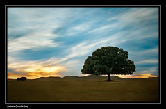 (Antonio Carrillo (Ancalop)) Tags: trees winter espaa tree art nature arbol atardecer landscapes spain paisaje murcia caravaca canon450d ancalop