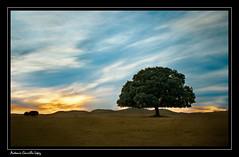 (Antonio Carrillo (Ancalop)) Tags: trees winter espaa tree art nature arbol atardecer landscapes spain paisaje murcia caravaca canon450d ancalop