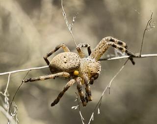 Spider babysitting!