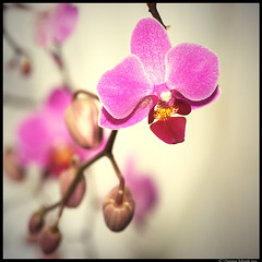When speech comes from a quiet heart, it has the strength of the orchid, and the fragrance of rock. -   Stephen Mitchell (tad