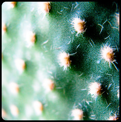 (byetman) Tags: cactus spine spines