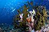 Heaven (Lea's UW Photography) Tags: coral underwater fisheye maldives fins malediven korallen tokina1017mm unterwasserfoto leamoser