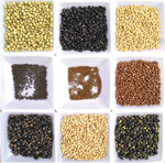 USDA's Soybean Germplasm Collection