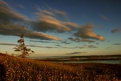 Sunset Landscape (Clyde Barrett) Tags: sunset sky cloud newfoundland landscape wildflowers nl nfld naturesfinest clydebarrett