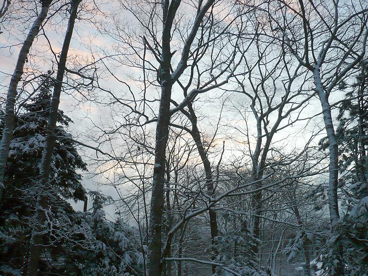tree+sky