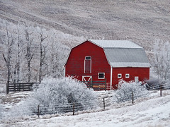Can't beat a red barn (annkelliott) Tags: winter red white canada cold beautiful barn rural fence landscape lumix scenery seasons hoarfrost explore alberta backroad redbarn winterscene ruralscene beautyinnature southernalberta interestingness245 allrightsreserved annkelliott southofhighway22x fz28 panasonicdmcfz28 anneelliott2009 explore2010january27 p1330328fz28 leapfrogshats
