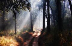Road to Enlightenment (Junkie Dude) Tags: road morning trees light black yellow backlight dark way dawn shadows path trail enlightenment orton hpc kanhanationalpark nikkor70300mm ortoneffect nikond40 krishlikesit nikkor1555mm raghuramr raghuramrallapalli