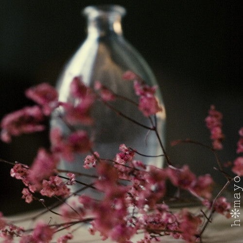 floraldream2