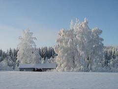 White Winter (- Vuokko -) Tags: karmapotd karmapotw