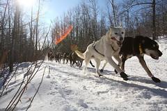 27th Running of The John Beargrease Sled Dog Marathon