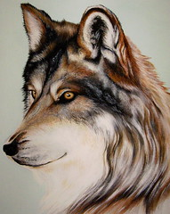 """Wolf Stare"" by Denise A. Wells (Denise A. Wells) Tags: detail art painting artwork wolf acrylic different exotic unusual striking animalportrait wildlifeart nativeamericanartist deniseawells realisticeyedrawings denyceangel40yahoocom realisticeyepaintings"
