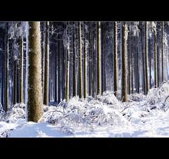 Winter im Sauerland (motivsucher) Tags: schnee winter snow cold hoarfrost kalt raureif sauerland niedersfeld clemensberg