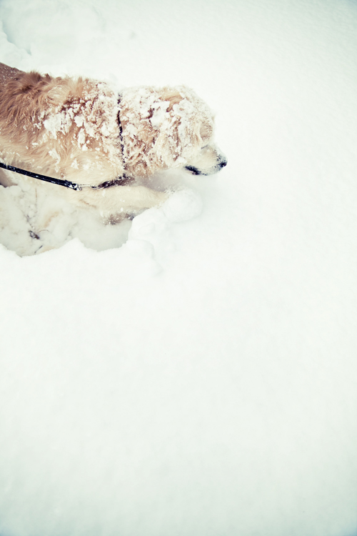 Rayson the snow dog.