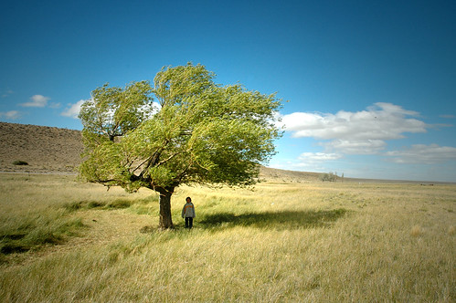 tree and boy in Patagonia