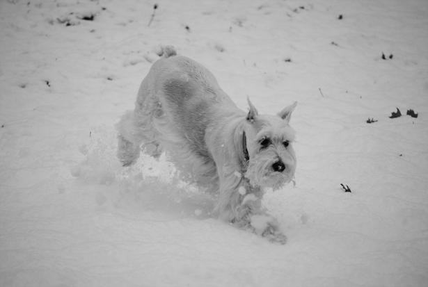 Lola snow
