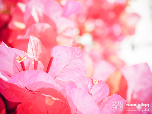 R9180493 (by euyoung)