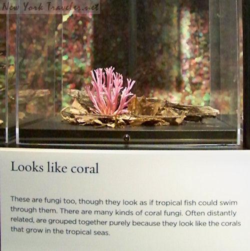 CoralFungi