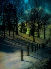Winter's Eve (DaraDPhotography) Tags: trees sunset texture nature landscape lightroom cs4 gpc greatphotographers awardtree topazadjust artofimages imagesforthelittleprince miasbest magicunicornverybest selectbestfavorites sailsevenseas florabellaarttextures1
