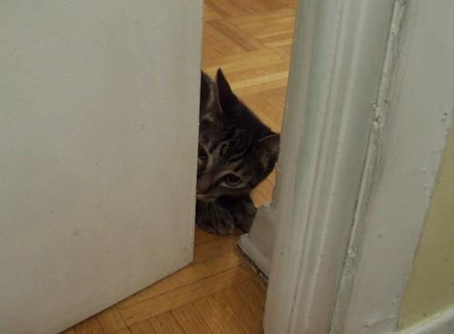 Shakespeare peeking around the corner (1)