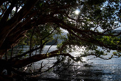 Atardecer en Lago Verde (( ( Juan P ) )) Tags: patagonia argentina landscape nationalpark paisaje lagos parquenacional lagoverde patagoniabarilocheesquel