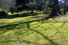 IMG_5869 (alliewilkinson) Tags: park usa newyork tree uploaded longisland nassaucounty dawnredwood lattingtown baileyarboretum viaaperture