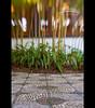 Chinese Gardens (Jesse Estes) Tags: lensbaby oregon portland chinesegardens 5d2 jesseestesphotography