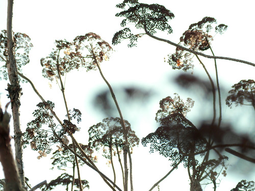 Dry Plants & Sky