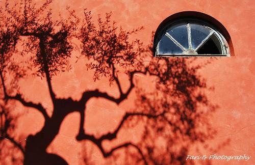 La finestra e il ricordo di un albero