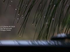 trilogia de reflejos parte 3 (Mex::::::Gabriel:::Parker::::::Arg. 2016 images) Tags: naturaleza agua reflejos naturalshots despuesdelalluvia trilogias