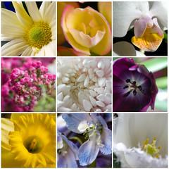 Nine ([collin]) Tags: flowers rose paul uncle funeral daffodil tulip daisy cwd cwdweek169 cwd1692