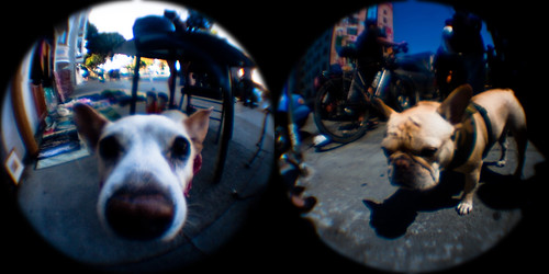 fisheye tin cam: example results