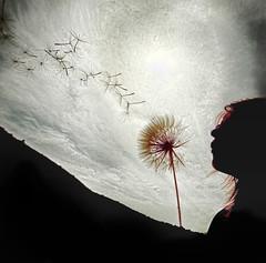 [フリー画像] 人物, 人と風景, グラフィックス, フォトアート, タンポポ, 種子, 201004280700