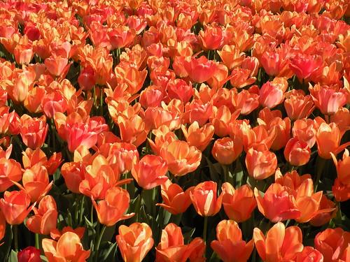 Visit: Longwood Gardens blog image 2