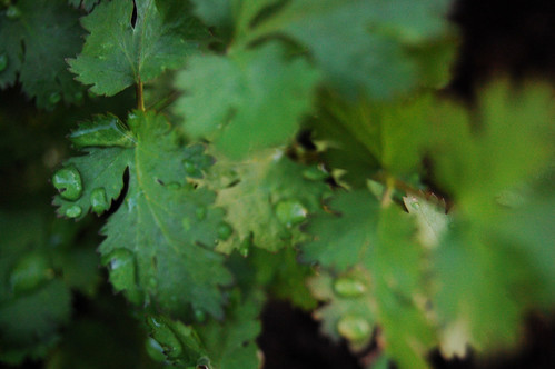 Cilantro Recall Update: Grower Claims There Is 'No Recall'